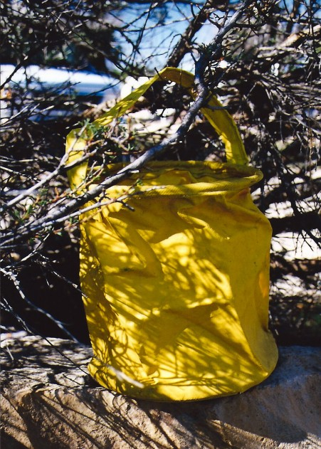 My old yellow bucket, a veteran of dozens of backpacking adventures, holding Colorado River water. It retired after my second trip