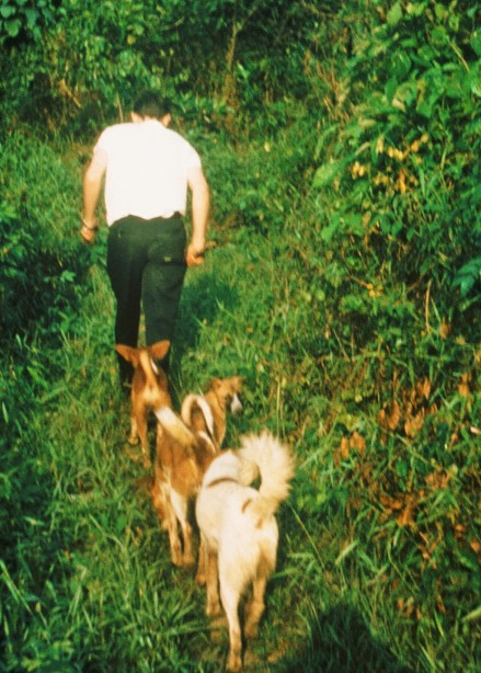 The usual assortment of dogs follows me up a jungle trail. Do Your Part, as always, is right on my heals.