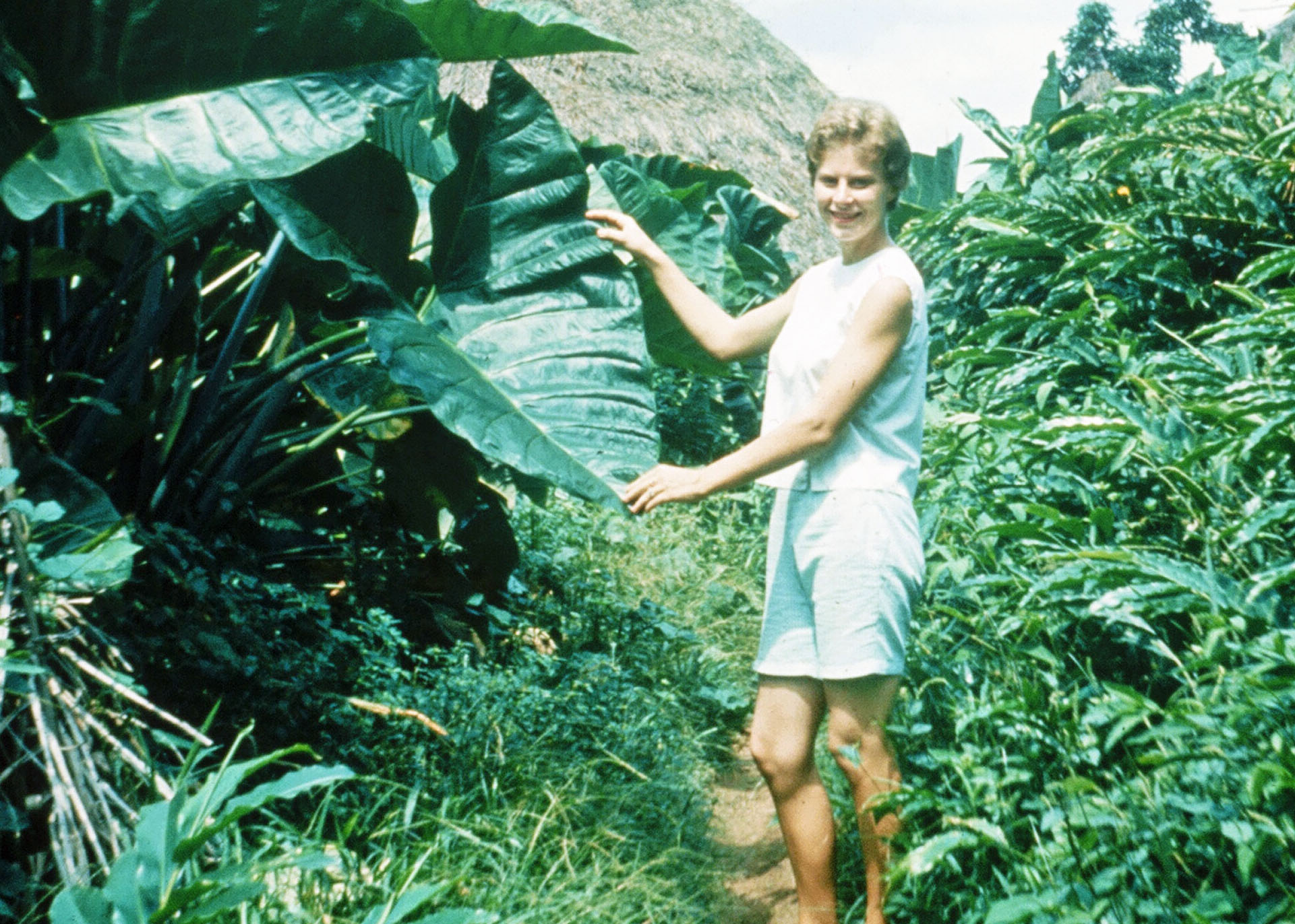 Jo Ann holds an Eddo or Taro leaf. The tubers of this plant are used as food throughout the tropics.