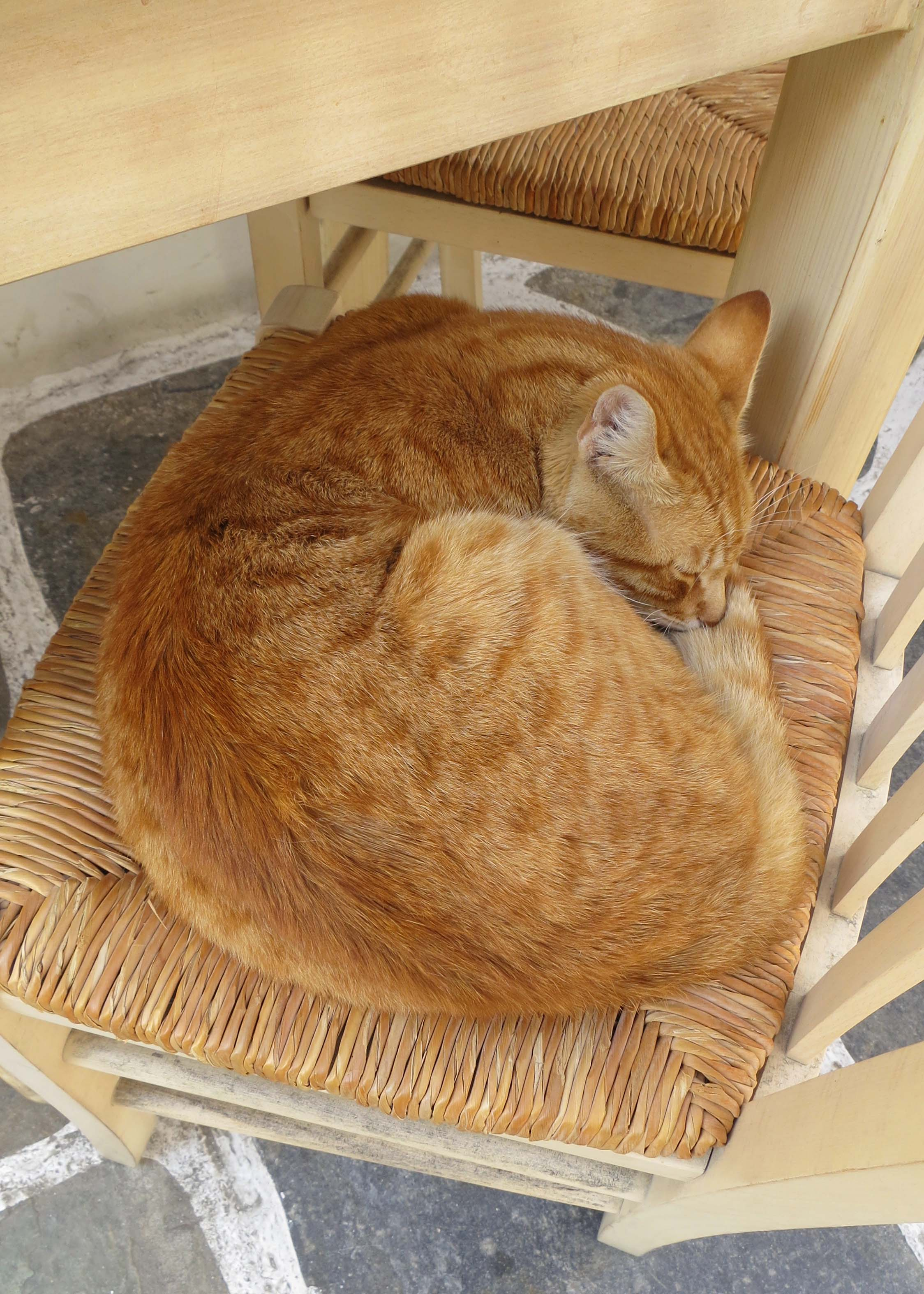 And a cat confiscated a cafe chair for its mid day snooze.
