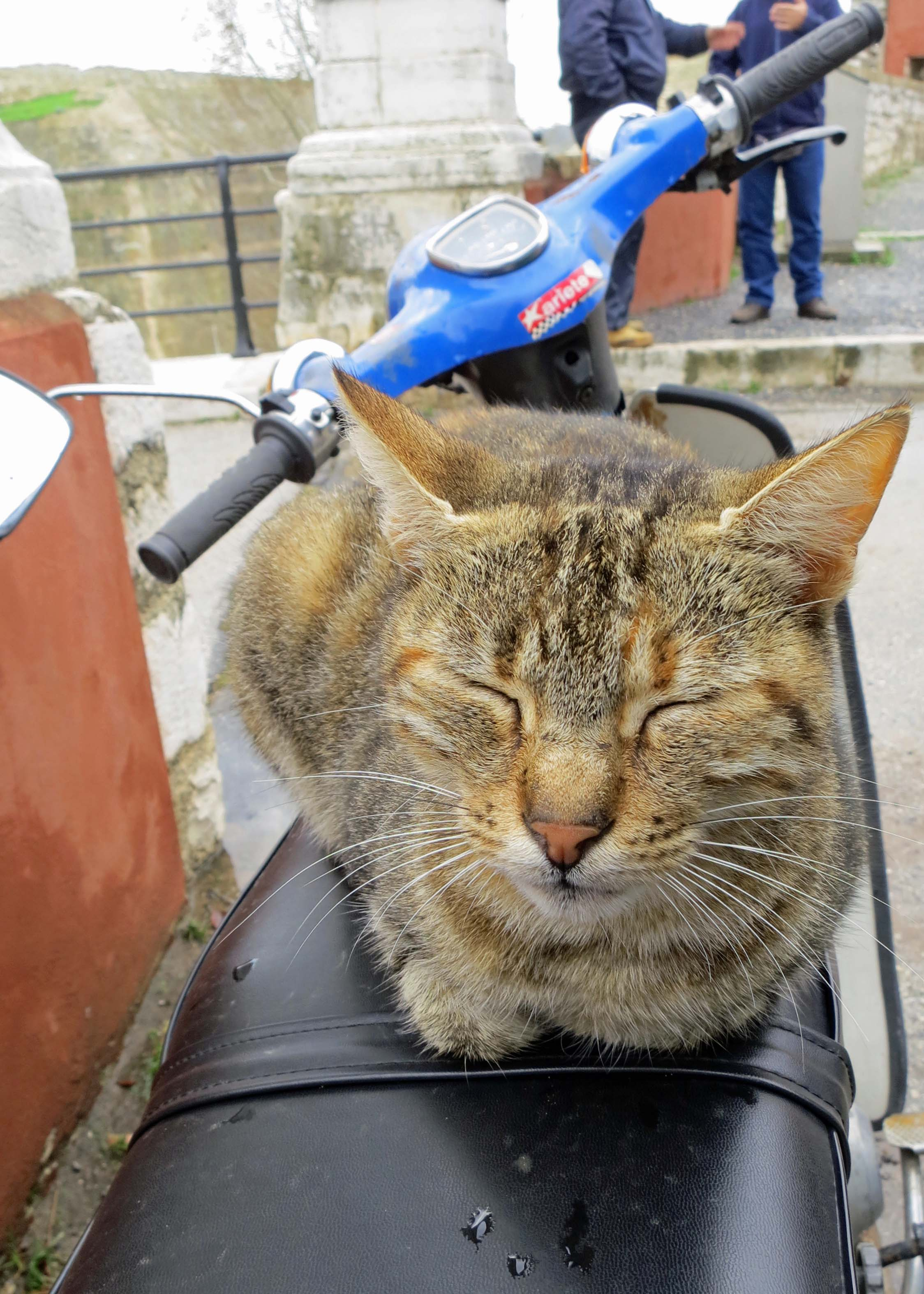 My obligatory cat photo. I caught this guy sleeping on the seat of a motor bike at the entrance to the Old Fort on Corfu. It may be a new definition of contentment.