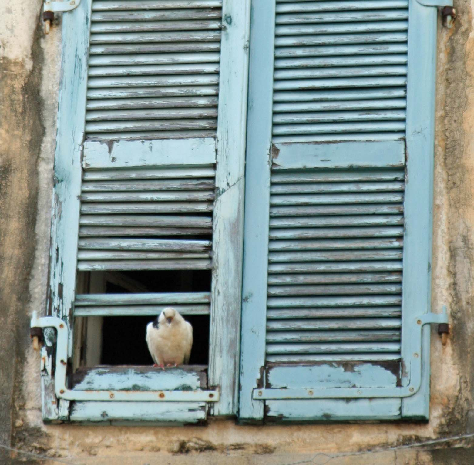 Peggy found this pigeon hanging out on the broken shutters of an abandoned building.