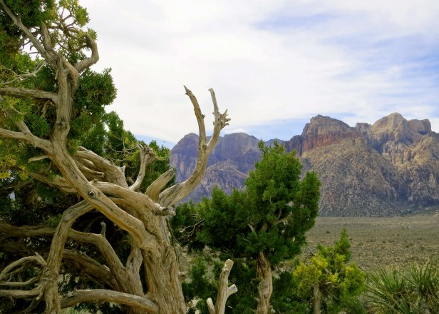 Red Rock Canyon with its beauty and silence is just a few minutes a away from Las Vegas.