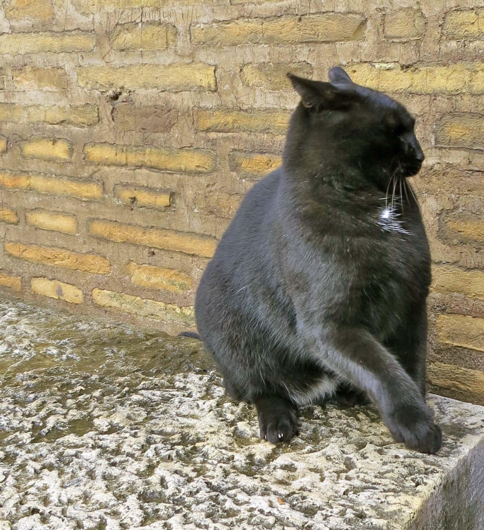 Cat in Colosseum.
