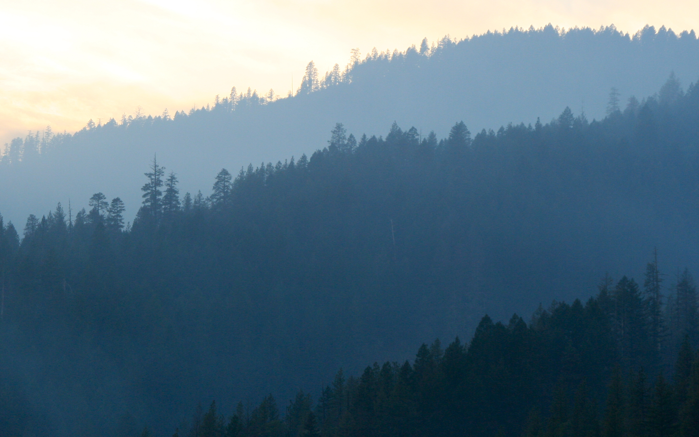 Southern Oregon Forest