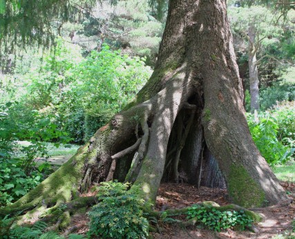 This tree was behind our van in the campground. Peggy loved it. In my last blog I noted you only see tree roots in the tropics. I lied. I could actually walk into the cave created by the roots.