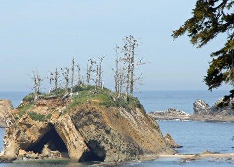 Cormorants nesting on an offshore island in Oregon.