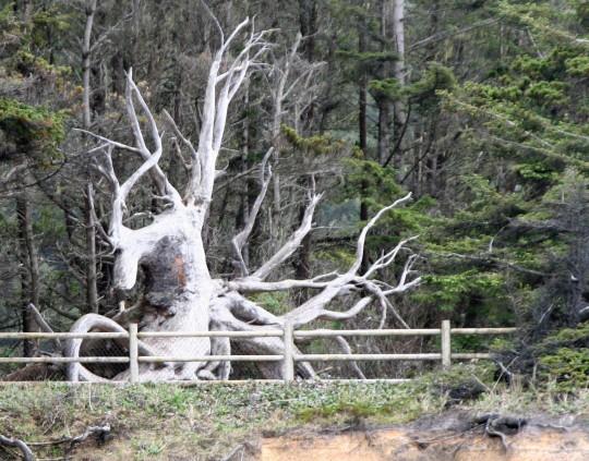 Tree root sculpture on Oregon Coast