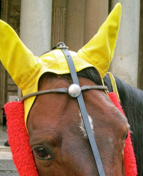 Horse with yellow ears in Rome