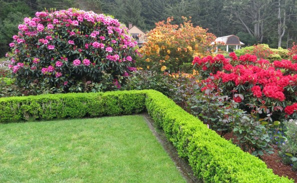 The Rhododendrons and azaleas were in full bloom at Shore Acres State Park on the Oregon Coast