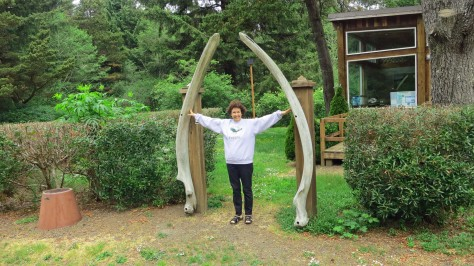 These lower jawbones of a juvenile Humpback Whale were on display at Sunset Bay Campground. Peggy provides a perspective on their size.