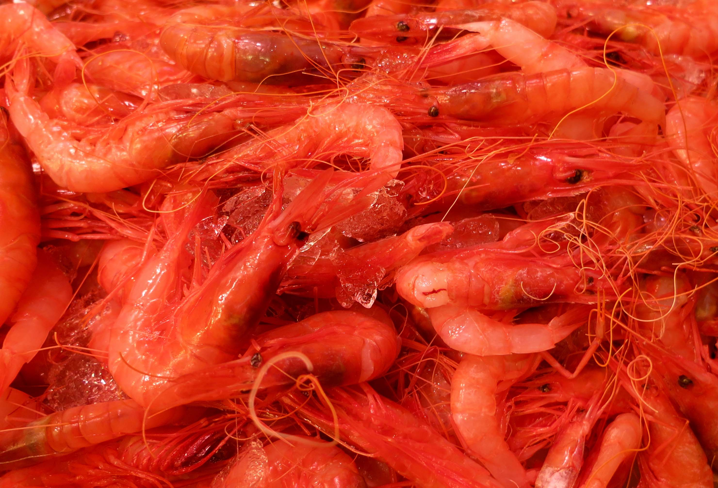 I found these shrimp colorful...