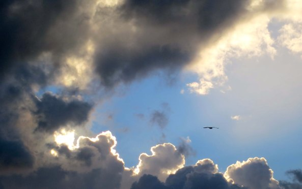 The sea bird soaring between the clouds spoke to how close we were to shore.