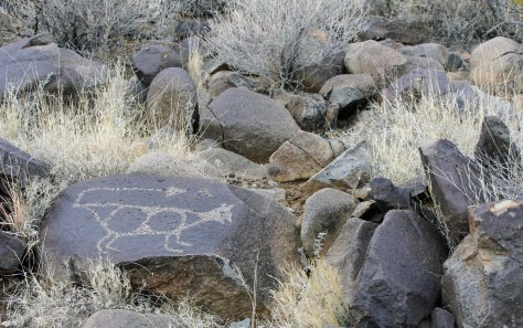 Mountain lion petroglyph found at Three Rivers Petroglyph site in southern New Mexico.