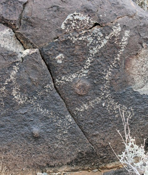 Petroglyph of coyote howling at the moon found in the Three Rivers Petroglyph site.