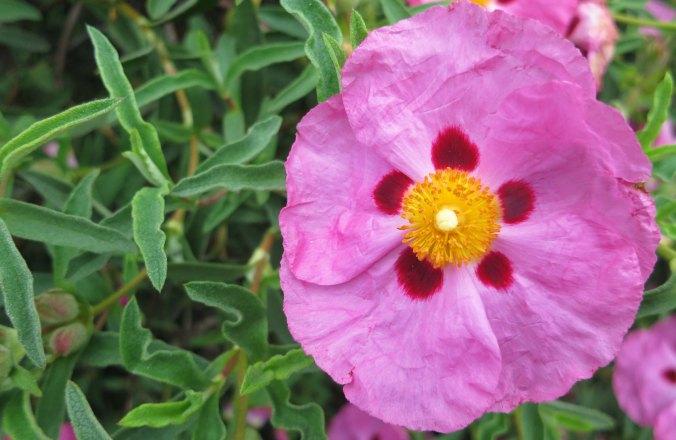 Flower in Jacksonville, Oregon.