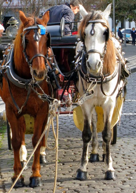 Carriage ride in Ponta Delgado in the Azores