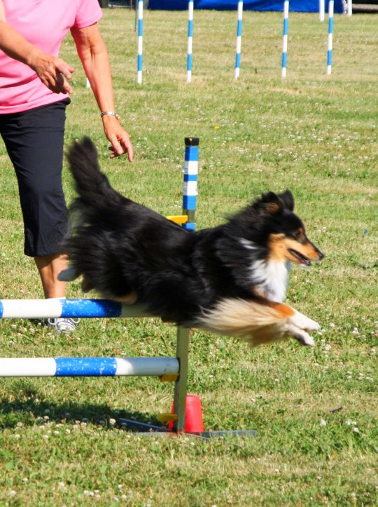 Dog agility trials at Quesnel BC.
