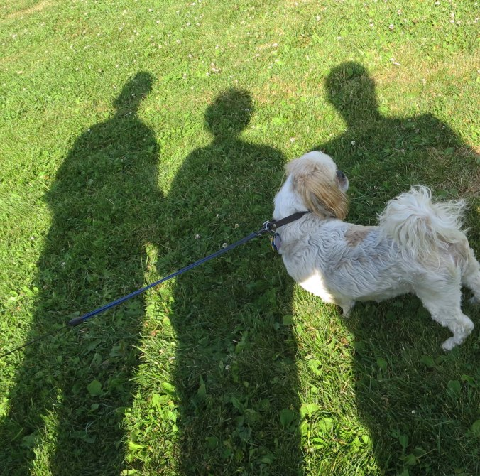 """Bob and Linda's dog, Sister, stands in our shadows and watches the action. Sister decided that much more than """"Good dog,"""" would be required for her to leap over hurdles."""