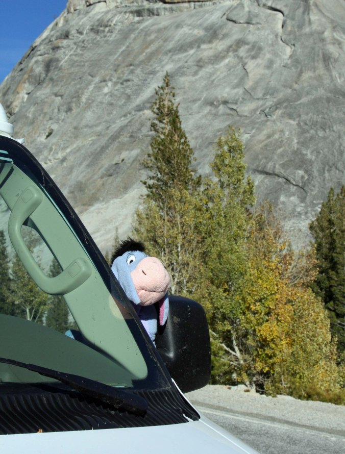 Quivera and Eeyore  share a moment at Yosemite National Park.