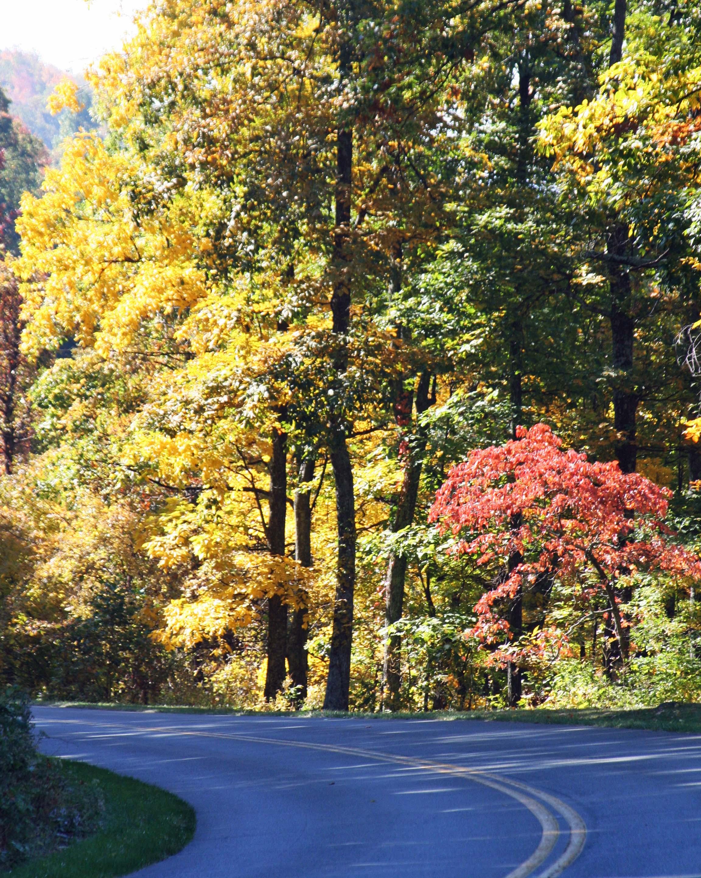 Fall photp of Blue Ridge Highway by Curtis Mekemson.