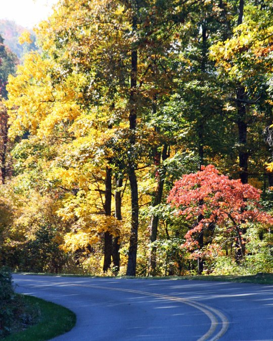 Fall photp of Blue Ridge Highway by Curtis Mekemson.