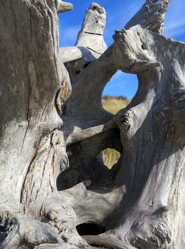 Close up photo of driftwood on Limantour Beach taken by Curtis Mekemson.