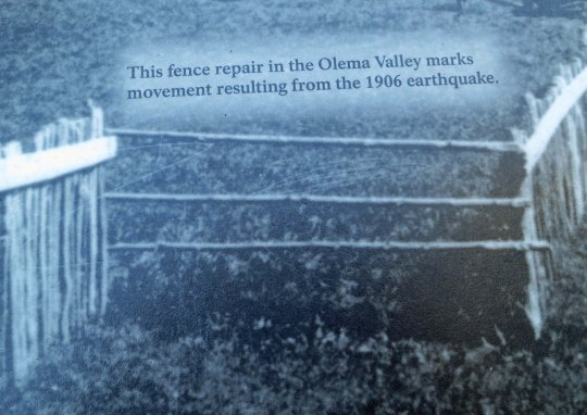 This old black and white photo included by the park service along the EarthQuake Trail shows the actual slippage created by the 1906 earthquake.