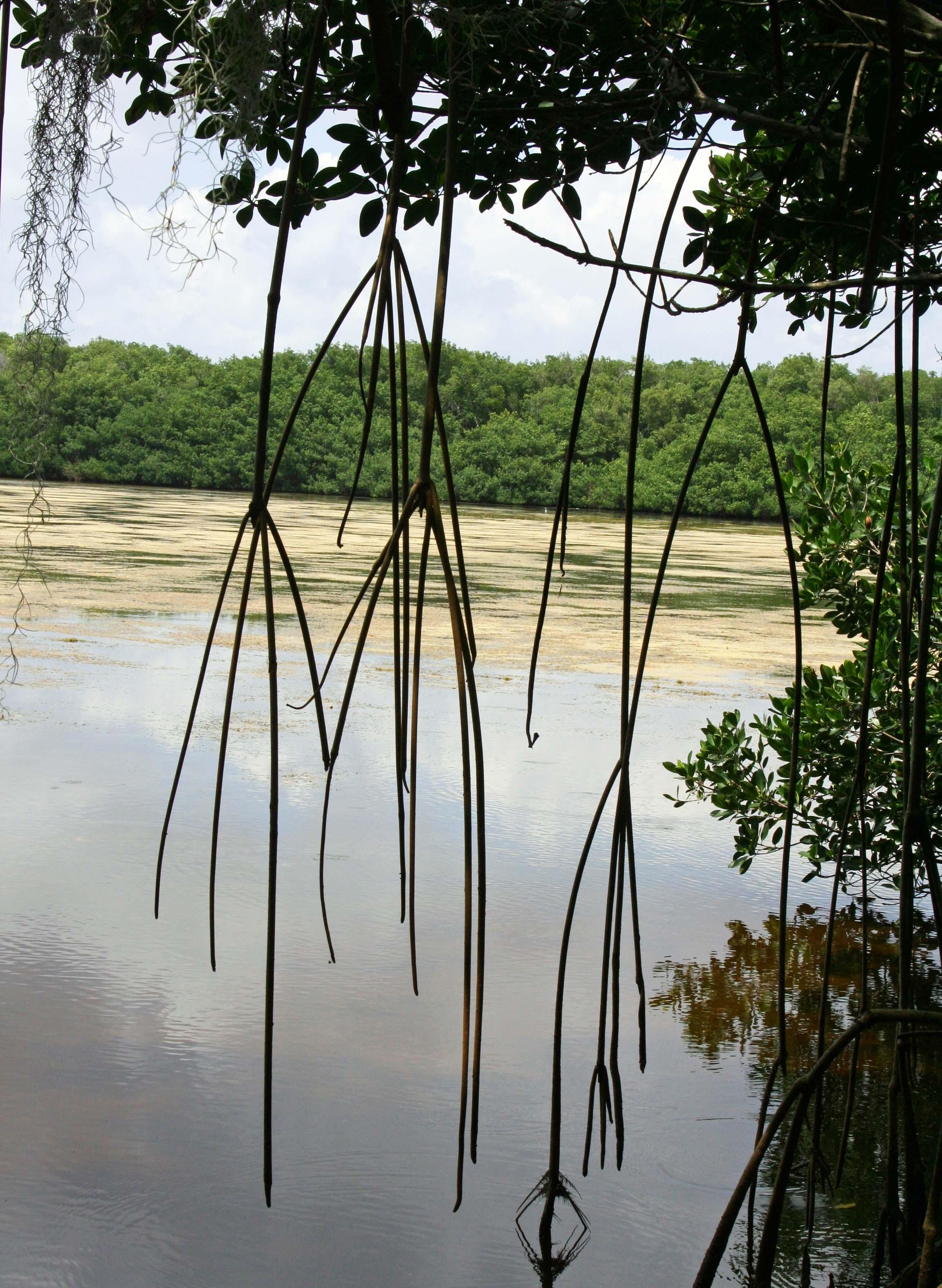 Everglades lake photo by Curtis Mekemson.