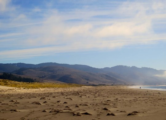 Looking south on Limantour Beach at Pt. Reyes National Seashore. Photo by Curtis Mekemson.