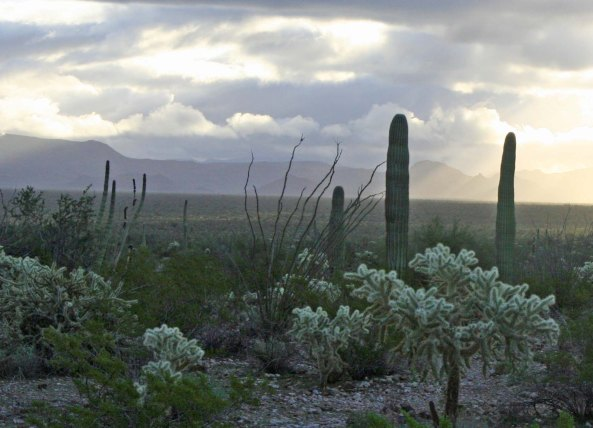 Organ Pipe National Monument. Photo by Curtis Mekemson.