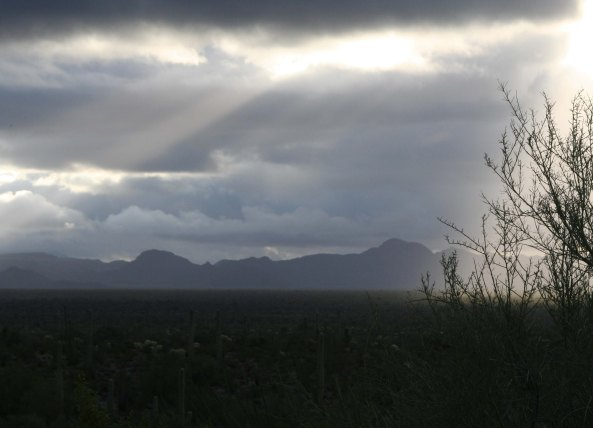 Organ Pipe National Monument in early morning light. Photo by Curtis Mekemson.