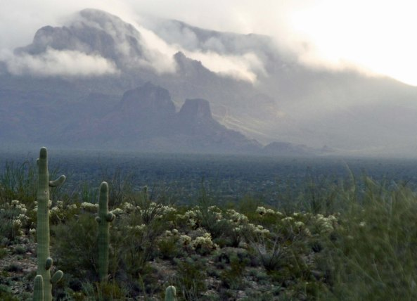 Misty mountains in Organ Pipe National Monument. Photo by Curtis Mekemson.