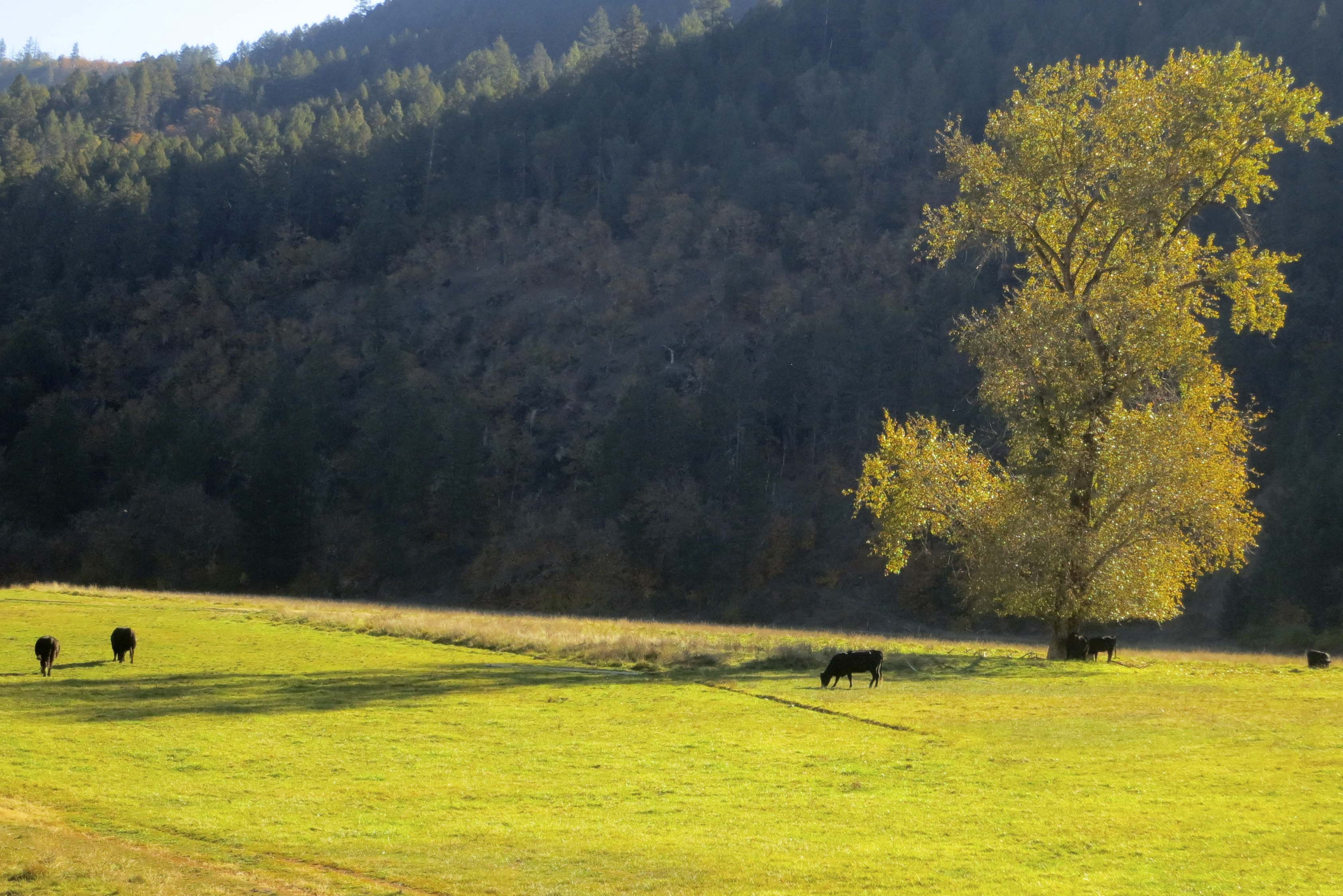 Photo along Upper Applegate Road in Southern Oregon by Curtis Mekemson.
