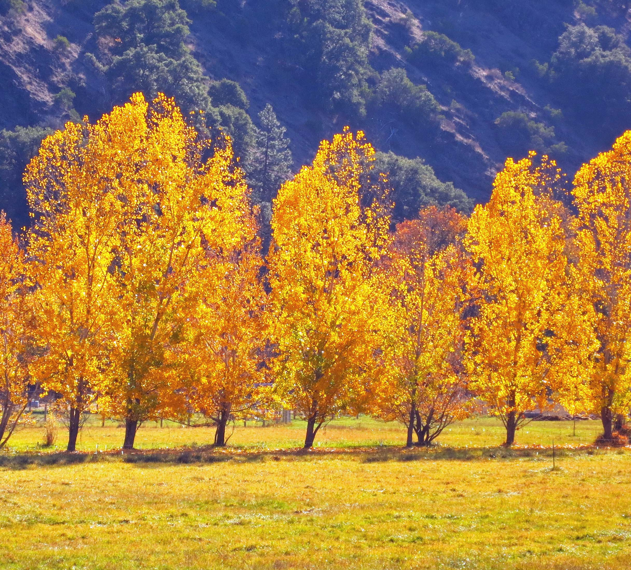 Photo of fall view on Upper Applegate Road in Southern Oregon by Curtis Mekemson.