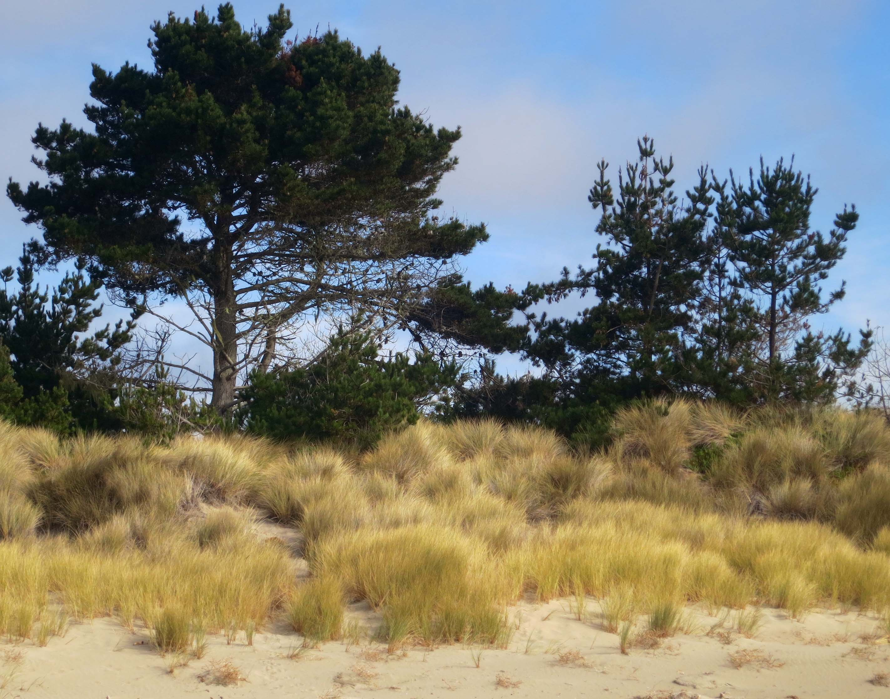 Photo of spit on Limantour Beach by Curtis Mekemson.