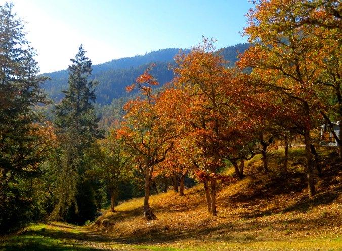 Southern Oregon fall photo by Curtis Mekemson.