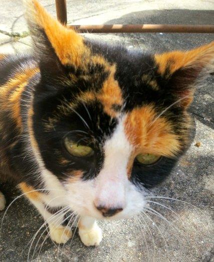 Photo of Hacienda Jalisco cat by Curtis Mekemson.
