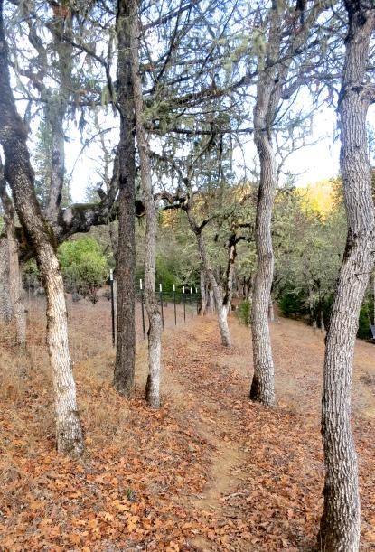 Applegate Valley,Oregon deer trail. Photo by Curtis Mekemson.