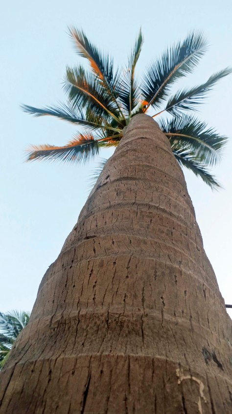 Palm tree view in Puerto Vallarta. (Photo by Curtis Mekemson.)