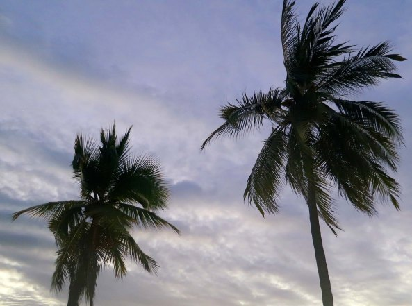Palm trees outlined against the sky in Puerto Vallarta. Photo by Curtis Mekemson.)