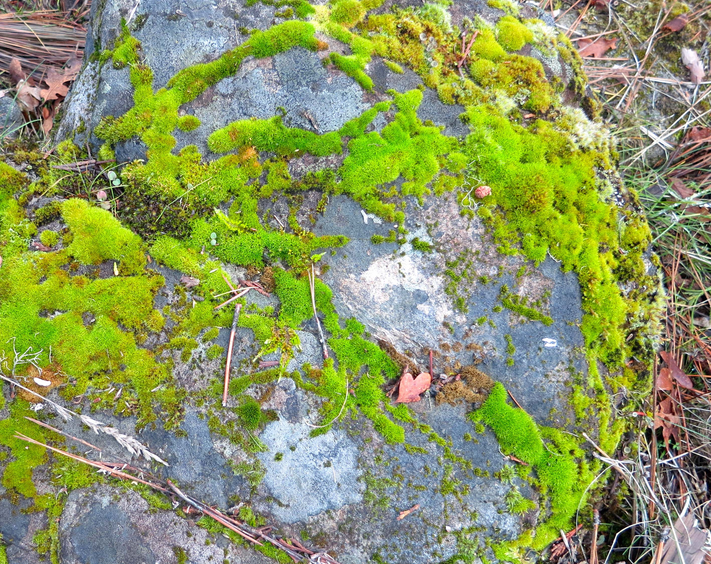 River rock covered in moss on Applegate River in Oregon. Photo by Curtis Mekemson.