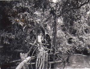 Kpelle footbridge near Gbarnga, Liberia circa 1965.