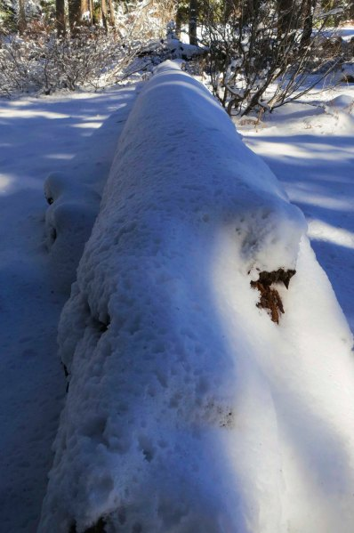 Snow covered log at Donner Summit. Photo by Curtis Mekemson.