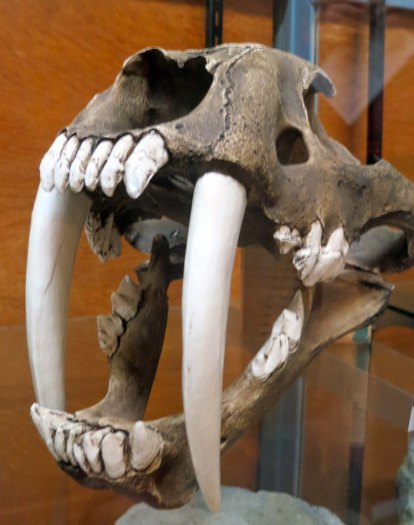 Speaking of bad, check out the canines on this Saber toothed kitty.