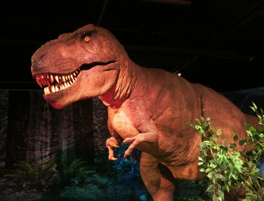 Robotic Tyrannosaurus at the Science Works Museum in Ashland, Oregon. Photo by Curtis Mekemson.
