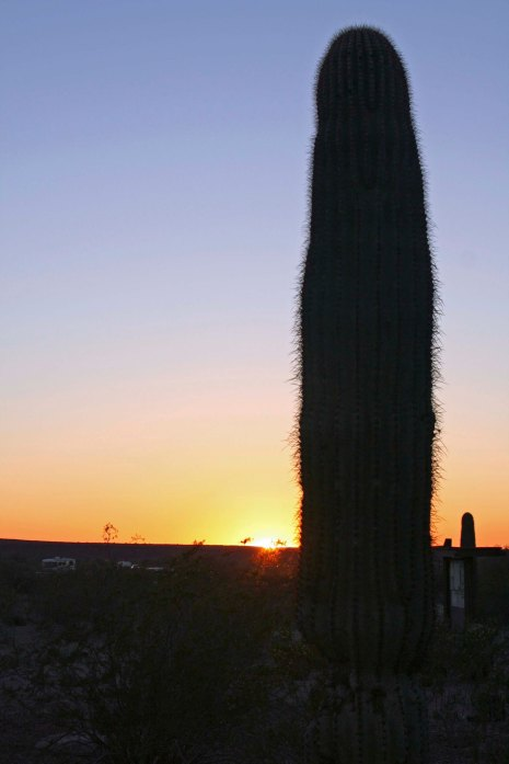Setting sun outlines Saguaro Cactus at Painted Rock Petroglyph Site in southern Arizona. Photo by Curtis Mekemson.