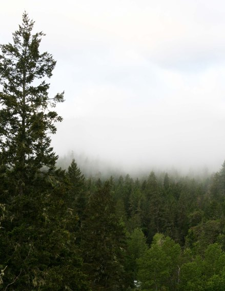 It isn't hard to imagine Bigfoot prowling around in the forest when you look out our front window on a misty morning.