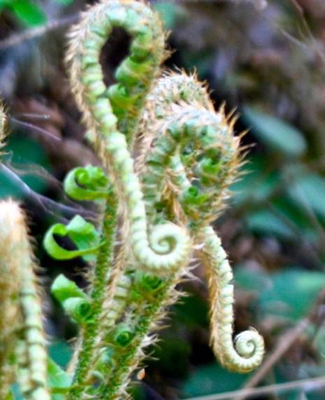 Ferns growing near Applegate River in Southern Oregon.