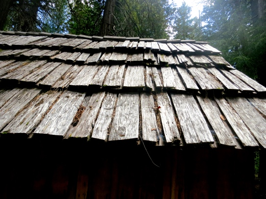 Roof of cedar shake cabin in Red Butte Wilderness area.